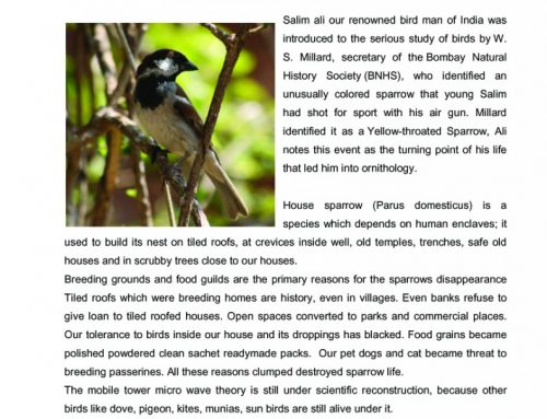 It's World Sparrow Day